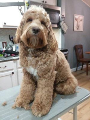 dog breeder website client